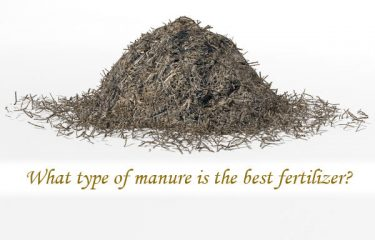 What type of manure is the best fertilizer?