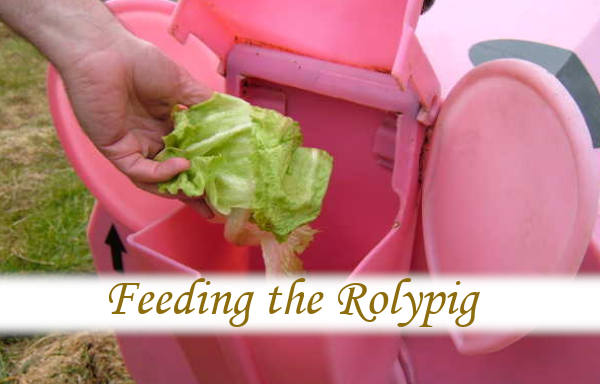 Feeding the Rolypig