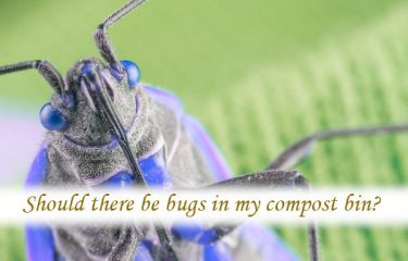 Should there be bugs in my compost bin?