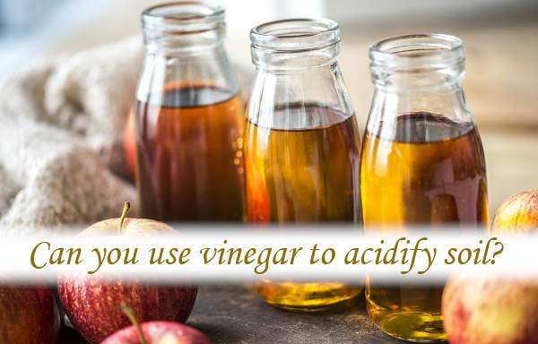 Can you use vinegar to acidify soil?