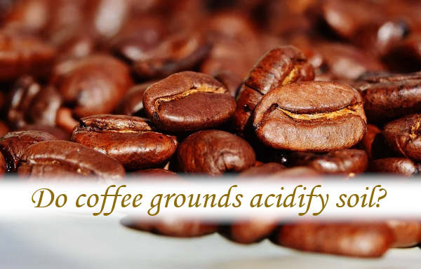 Do coffee grounds acidify soil?