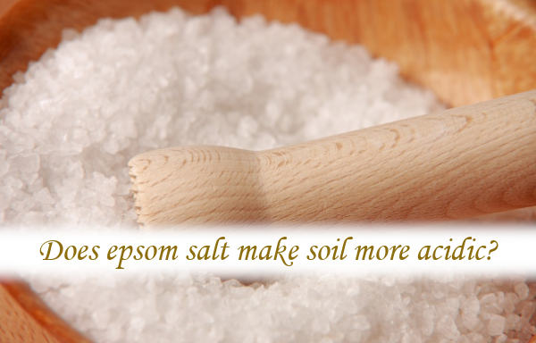 Does epsom salt make soil more acidic?