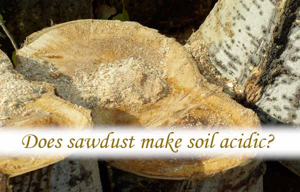 Does sawdust make soil acidic?