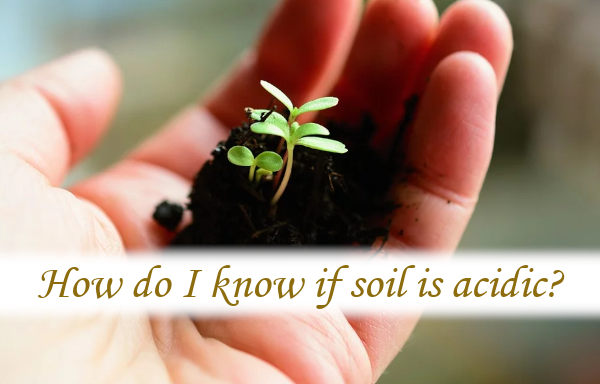How do I know if soil is acidic?