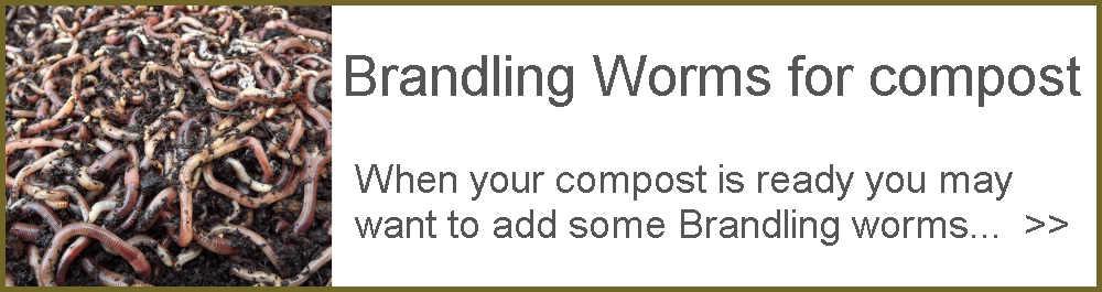 Brandling Worms