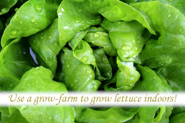 Use a Grow-farm to grow lettuce indoors.