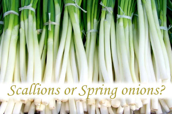 How do you grow scallions indoors?_03