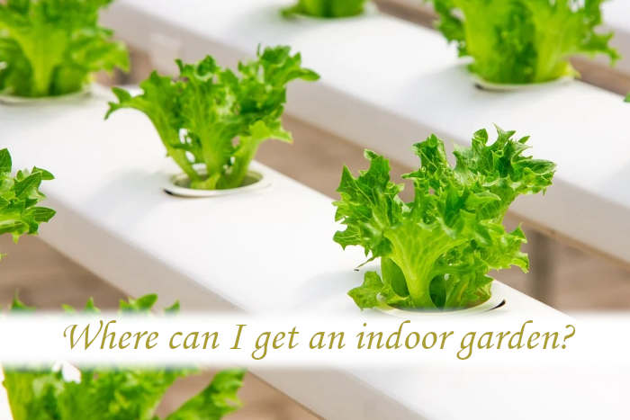 Where can I get an indoor garden?
