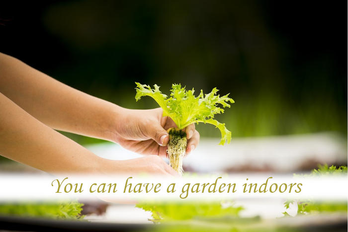 Where can I get an indoor garden?_02