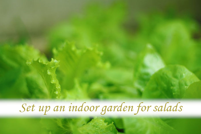 Where can I get an indoor garden?_03
