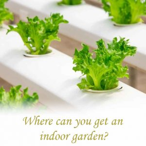 Where can I get an indoor garden?_04