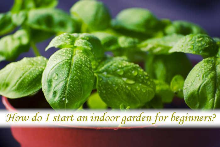 How do I start an indoor garden for beginners?