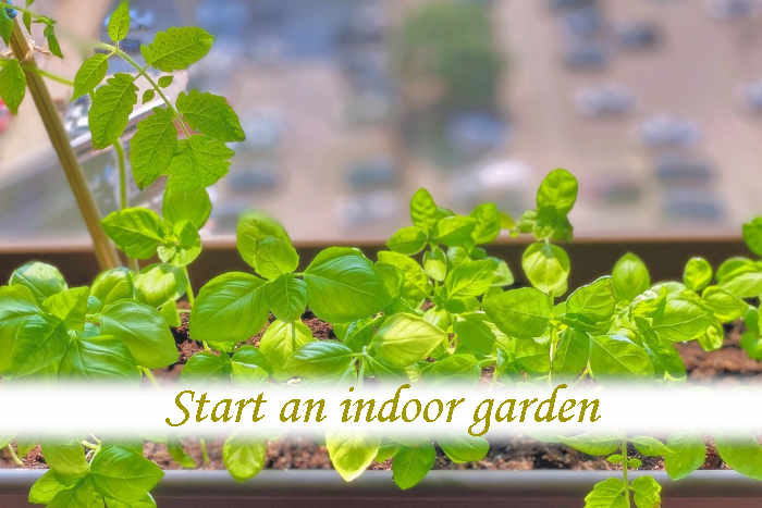 How do I start an indoor garden for beginners?_02