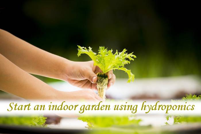How do I start an indoor garden for beginners?_03