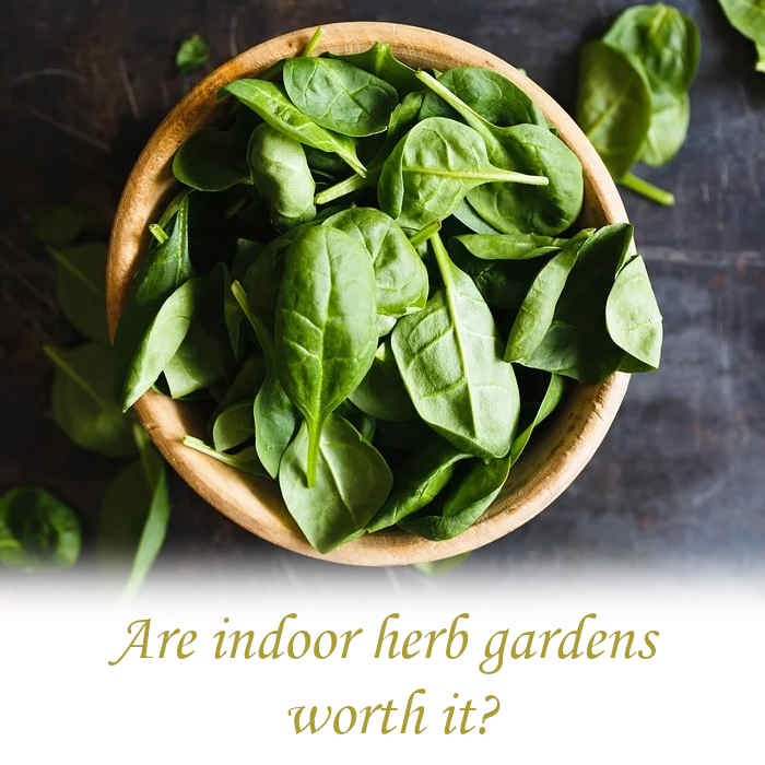Are indoor herb gardens worth it?