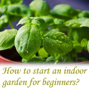 How do I start an indoor garden for beginners?